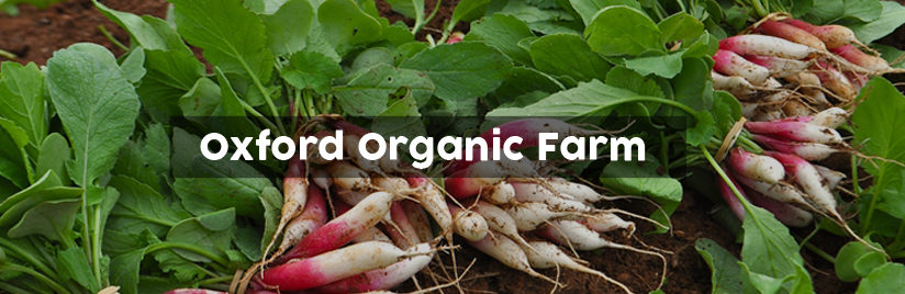 Oxford Organic Farm