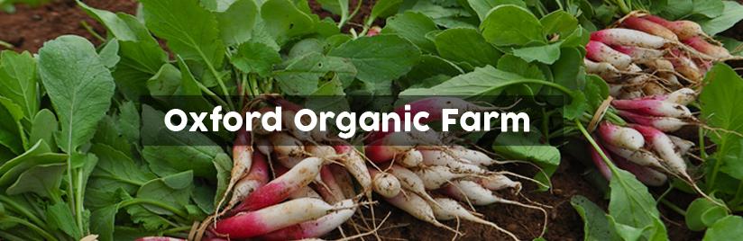 Oxford Organic Farm
